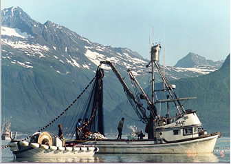 Commercial fishing in Prince William Sound Valdez Alaska